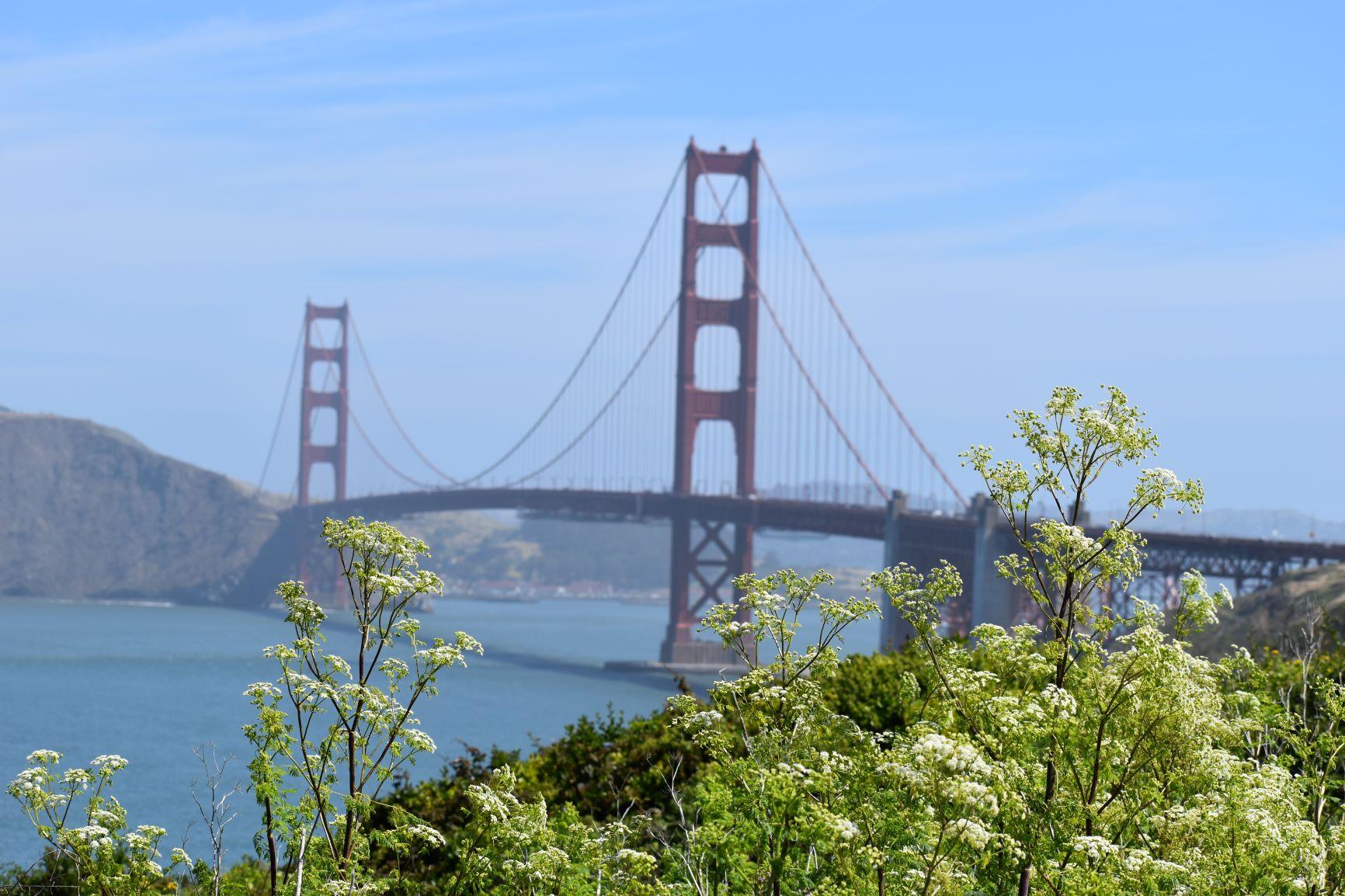 עם התה והלימון והספרים הישנים: יושב בסן פרנסיסקו על המים / יניר רובינשטיין